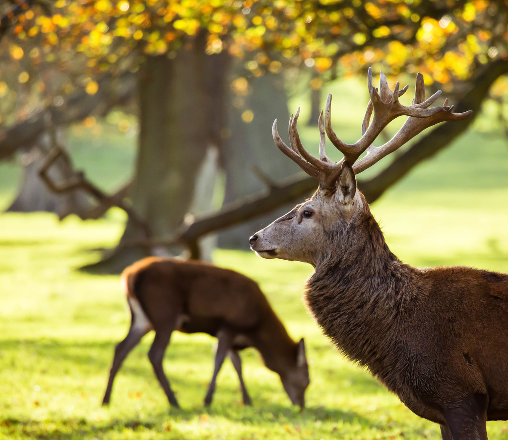21st November 2015     - Calm after the rut by pamknowler