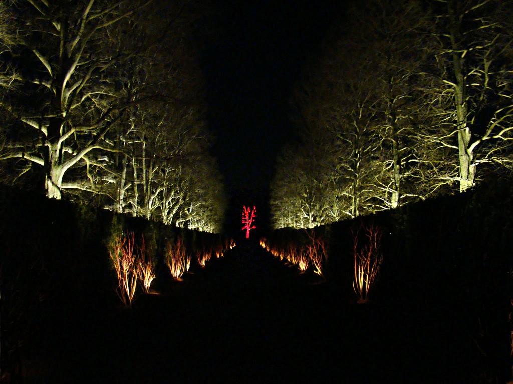 Christmas Lights at Longwood by joysabin