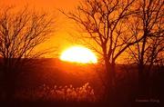 22nd Nov 2015 - Kansas Sunset 11-22-15
