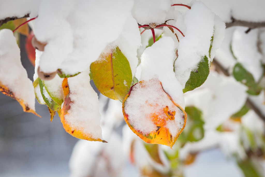 Clash of Seasons by lindasees