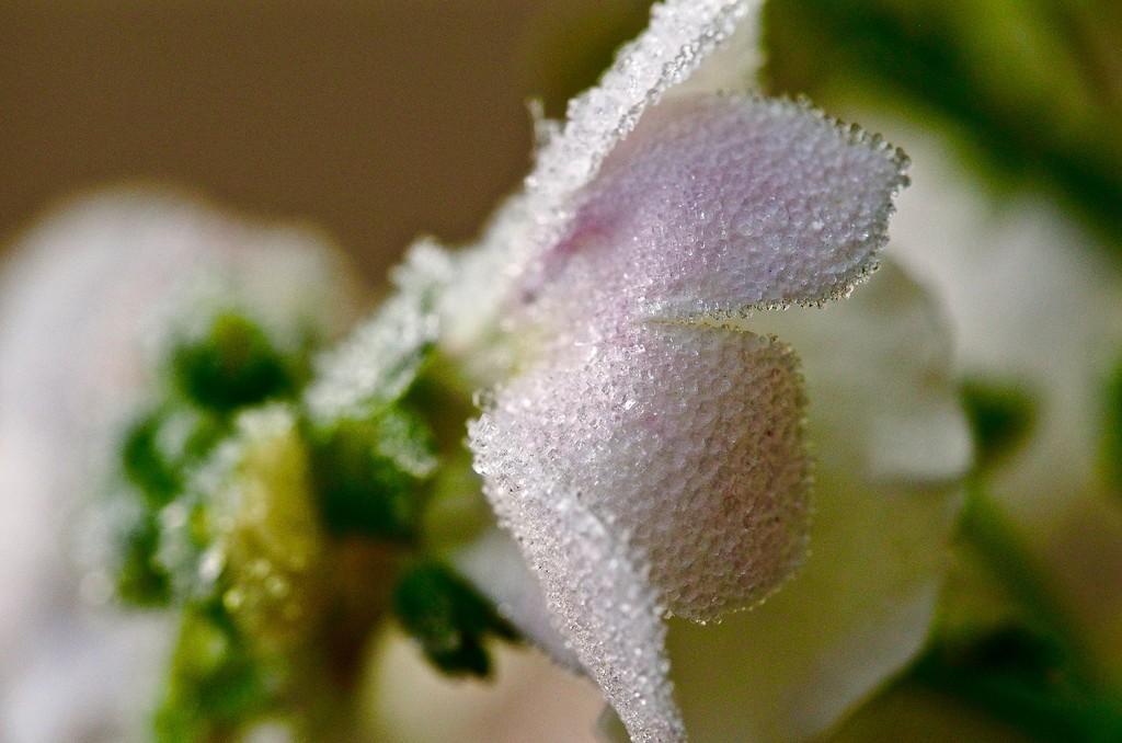 Bodice by pistache