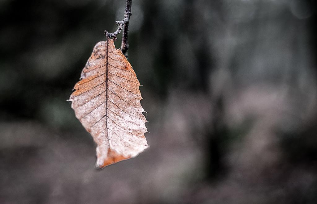 Minimal Monday Leaf by vignouse