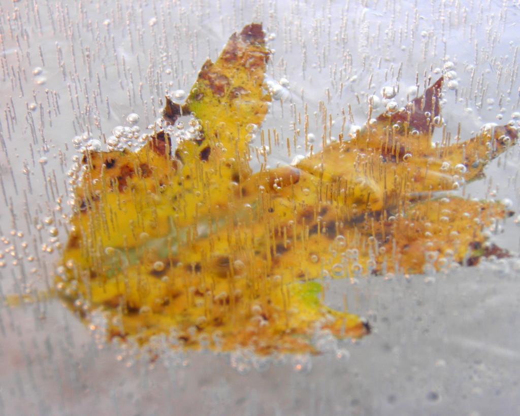 Frozen by daisymiller