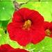 Lucy's Week- Flowers 1