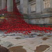POPPIES, LIVERPOOL TWO by markp