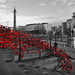POPPIES, LIVERPOOL by markp
