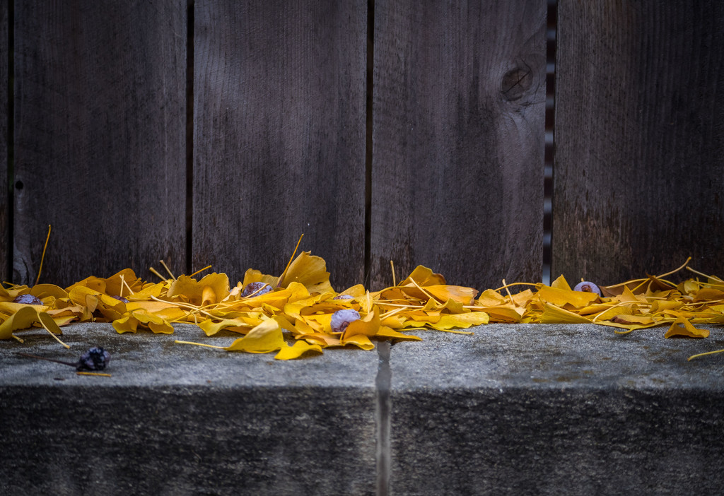 Leaves on a Wall by rosiekerr