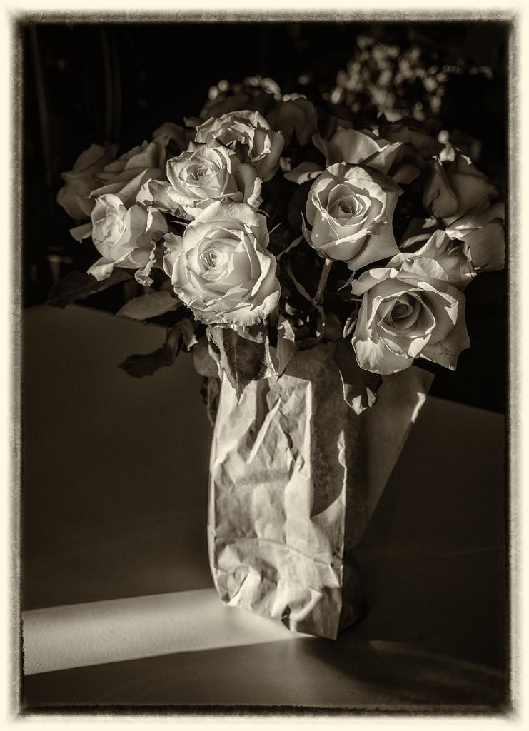 November22_2015_Bicolor_roses_BW_365 by trinda