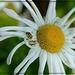 Lucy's Week- Flower 4
