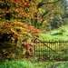 The rusted gate and forgotten path by swillinbillyflynn