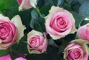 7th Nov 2015 - 2015 11 07 Belated Birthday Roses