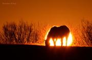 27th Nov 2015 - Horse-Clipse