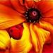 Lucy's Week- Flower 5 by olivetreeann