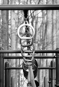 27th Nov 2015 - Ring and Bars in the Woods