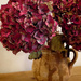 Dried Hydrangeas.... by snowy