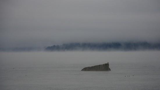 Misty Morning by kwind