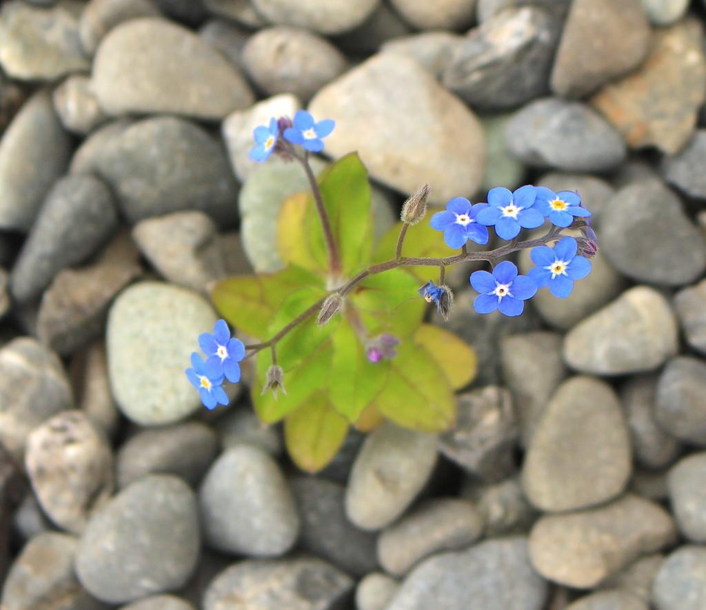 Forgotten and Blue  by kiwinanna