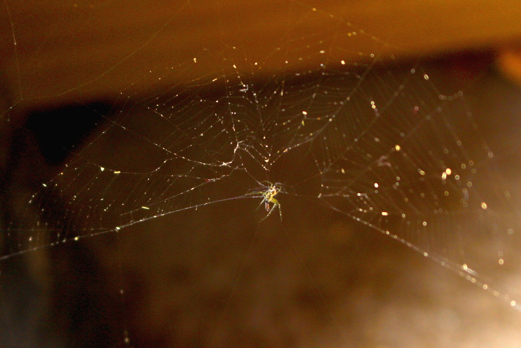 Spider in web by kiwinanna