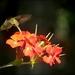 Lucy's Week- Flowers 8 by olivetreeann