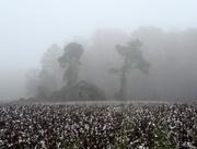 1st Dec 2015 - Shroud of fog!