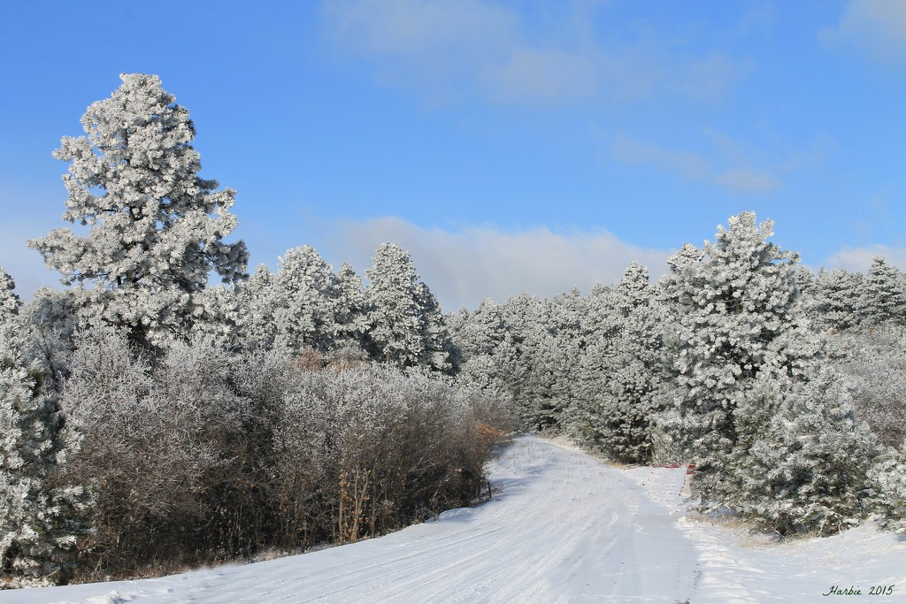 Frosty Road by harbie