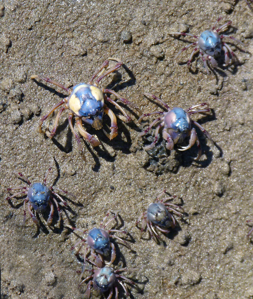 Soldier Crabs by onewing