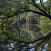 Live oak and reflection, Charles Towne Landing State Historic Site, Charleston, SC by congaree