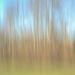 ICM Woods by loweygrace