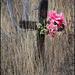 overgrown but not forgotten by aikimomm