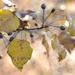 Colors of Autumn 35 by loweygrace