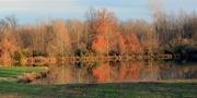 1st Dec 2015 - Autumn colors in December