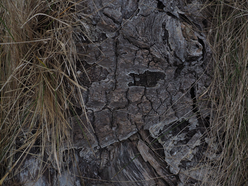 Face in the Wood by selkie