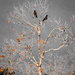Two Crows Fly Into A Tree... by elatedpixie