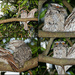 Our Frogmouth Family by terryliv