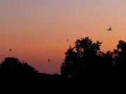 27th Sep 2011 -  Three Bats and a Plane.....