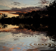 8th Sep 2011 -  Skipping Stones on the Flood....
