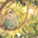 A Budgie in a Christmas Tree by mhei