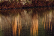 10th Dec 2015 - Late Fall Reflections