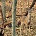 Look Out Deers by moviegal1