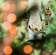 13th Dec 2015 - 2015 11 13 Bokeh and Birds