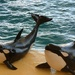 Whales at Loro Park, Tenerife.... by brickmaker