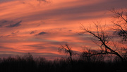 12th Dec 2015 - Sunrise over the pond (minus the pond)