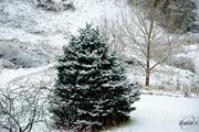 14th Dec 2015 - A little snow