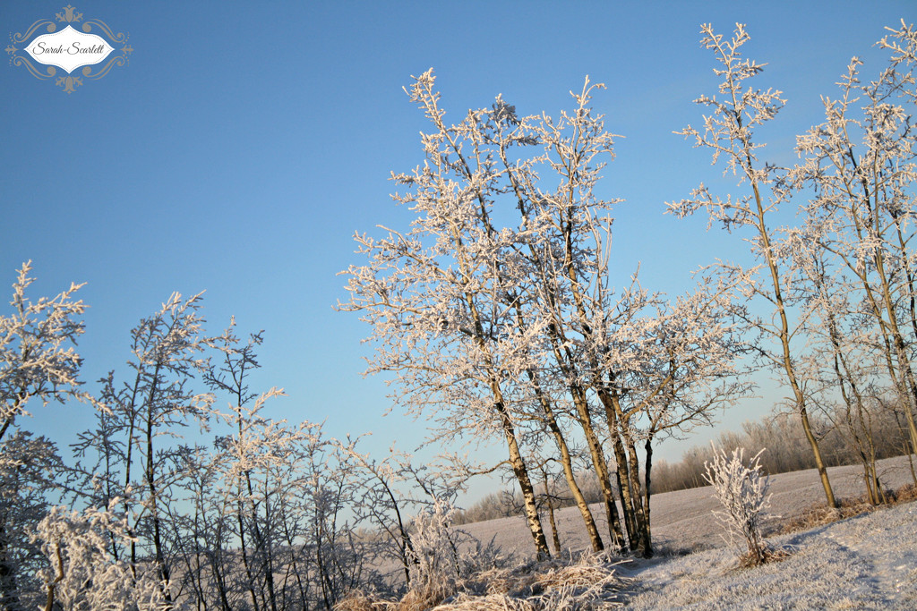 Hoar Frost by sarahlh