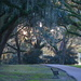 A favorite scene among the live oaks at Charles Towne Landing State Historic Site by congaree