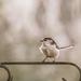 My favourite UK bird by shepherdmanswife