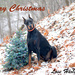 Happy Holidays to everyone! by fayefaye