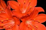 31st Aug 2008 - Desperation flower....