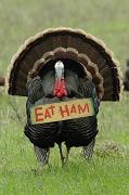 "24th Nov 2010 - ""Eat Ham"""