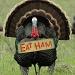"""Eat Ham"" by pixelchix"